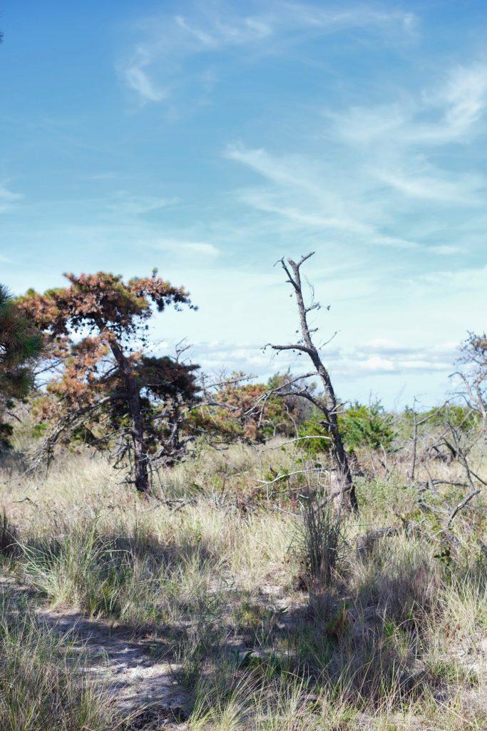 Robert Moses State park Landscape