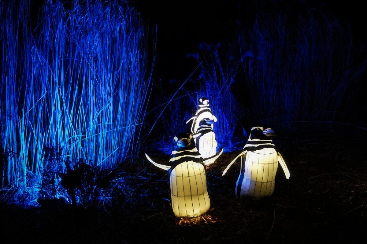 Holiday Lights Bronx Zoo